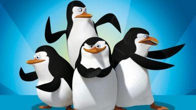 Photo of Τα μικρά βήματα των πιγκουίνων