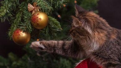 Photo of Στολίδια στο δέντρο: Χριστουγεννιάτικη… ρουτίνα: ΝΑΙ Ή ΟΧΙ;