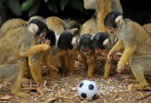 Photo of Το καπηλειό της μαϊμούς
